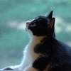 Kitten in Window Picture