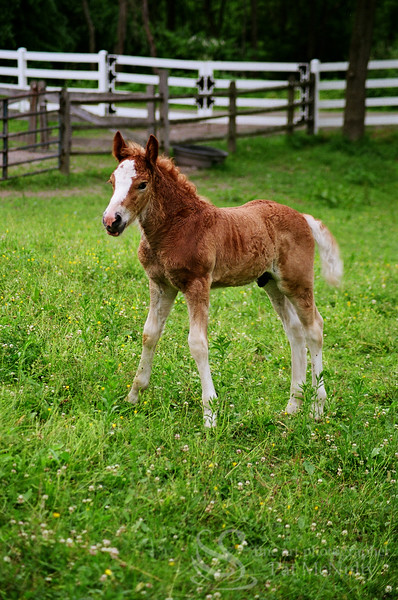 Horse Brown Colt Photo