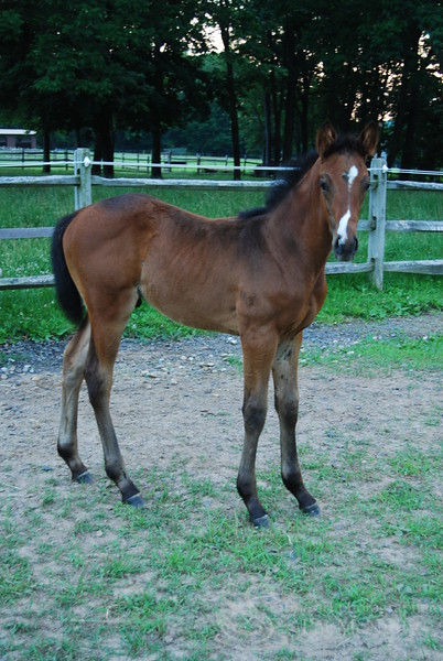 Brown Colt Picture
