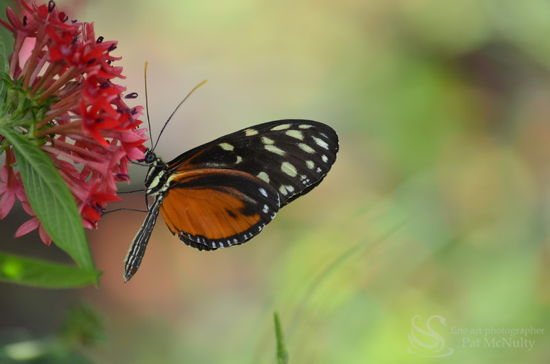Butterfly Sipping The Nectar Of a  Flower Picture