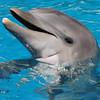 Dolphin Photograph