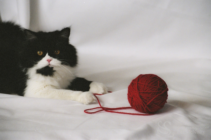Black & White Kitten with Yarn Photo