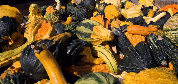 November 3 - The local farm stand has plenty of gourds to make Fall decorations. A cornucopia for the dining room sideboard would be nice.