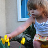 2009.02.26 (Thu) - Peyton tends to the new Tulips<br /> <br /> Up early, saw Brandon off this morning and then headed to work.  Work went well, took off for lunch with Bobby at Sunny Lees...  Returned to finish the day and then took off straight for Kayla's.  It is a new Thursday tradition for me to drive up and get my hugs and kisses since R & B are out late on Thursdays.<br /> <br /> Grabbed this shot of Peyton tending to the new Tulips that Chris planted to cheer up Kayla.  Now for dinner with my girls.<br /> <br /> Until tomorrow,<br /> <br /> Darron