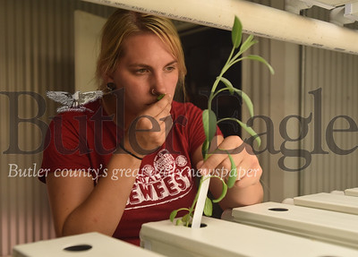 70019 North Country Brewing company Aquaponics system to grow herbs and vegetables for thier restaurants