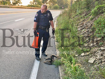 Butler Township Police Sgt. Jim Sasse rescues an injured goose along Route 8 south near the Greater Butler Mart. 3 col.