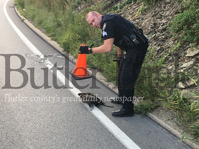 Butler Township Police Sgt. Jim Sasse rescues an injured goose along Route 8 south near the Greater Butler Mart. 5 col.