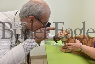 53807 Dr. Hisham Ibrahim owner of Good Shepherd animal hospital in Adams Twp