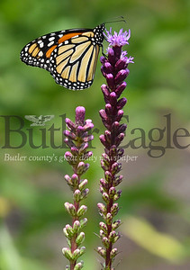 23893 Butterfly garden by Leadership Development Center on the Slippery Rock University campus