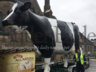 Coby Waltman, a marketing associate at Turkey Hill Dairy, an ice cream distributor headquartered in Lancaster County, shows off the company's giant cow while in downtown Butler on Saturday while handing out free samples and prior to participating in the Spirit of Christmas Parade. The appearance was part of the dairy's nationwide Good Mooed Tour.