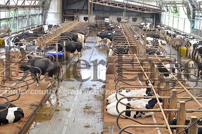 Davis Dairy in Chicora