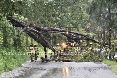 Tree down on Grimm Rd Buffalo Twp