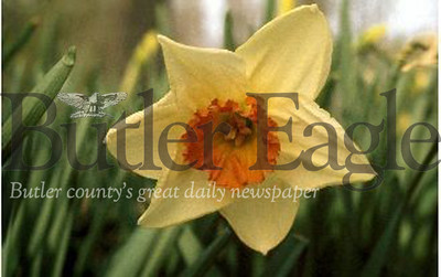 Plant Bulbs in the Fall for a Spring Celebration like t his daffodil. Master Gardeners G.A. Cooper/submitted photo