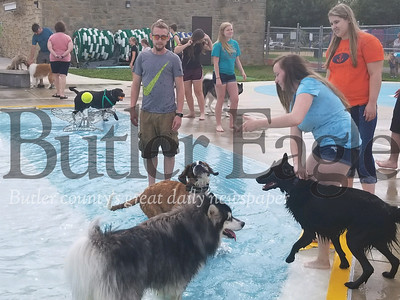 Morgan Richards of Petrolia throws a tennis ball into the pool as Blaze, her border collie, and Tucker, her Saint Bernard, ready to chase it into the water. Photo by Nathan Bottiger.