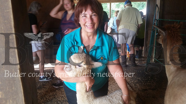 Carol Rost cuddles one of her farm's 38 alpacas on Saturday during the 2018 Butler County Farm Tour. Asgard Acres Alpaca Farm in Forward Township was one of five farms that hundreds of participants toured free of charge.