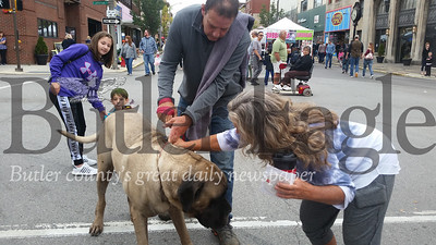Pat Schiebel and his wife, Linda, visited the 2018 Butler Fall Festival with their English mastiff, Remington, who proved to be a crowd favorite Saturday on Main Street.