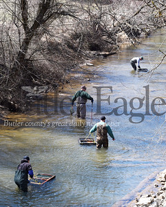 Harold Aughton/Butler Eagle: (Bottom left to top right) Terry Bennett of Refrew along with Ken Dunmyre of Butler, Rodger Davis, Penn Twp., and David Andrews of Butler volunteered Wednesday, April 3 to stock Thorn Creek with Brown and Rainbow trout. The Statewide Mentored Youth Program begins at 8:00 a.m. Saturday, April 6.