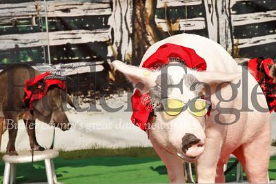 Farm Show 2019  Seb Foltz/Butler Eagle