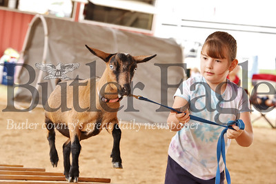 Alexandria Mikolaczyk, 8, leads her goat through the Farm Show goat obstacle course Wednesday. Mikolaczyk finished second in her first year competing in 4H competition. Seb Foltz/Butler Eagle 08/07/19