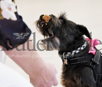 Harold Aughton/Butler Eagle: Kathy Roudybush, Life Stage Director at Newhaven Court, attempts to have her dog Sophie, a miniature schnauzer, flip a biscuit for a trick during the annual dogshow.