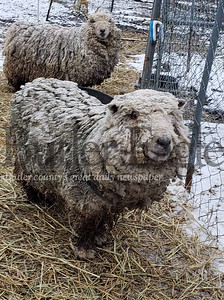 Thirty neglected animals were rescued from a Harmony residence on Saturday.