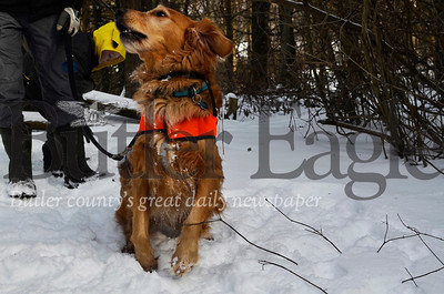 "Thor the dog enjoyed rolling in the snow during while on a hike at Moraine State Park Saturday. Tina Dunkle, who described Thor as her ""granddog"", said it was her first time ever hiking trails at the park, despite visiting it several times.  Tanner Cole/Butler Eagle"