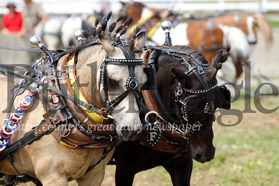 "Waylon Ferringer's miniature horse team of Adam(left) and Rock (right) competed with hairdos that would have been a ""Sure Shot"" to win a style competition. Seb Foltz/Butler Eagle"