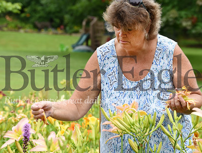 Harold Aughton/Butler Eagle: Karen Hall of Concord Twp. deadheads approximately 2,000 daylillies a day during the peak of the season.