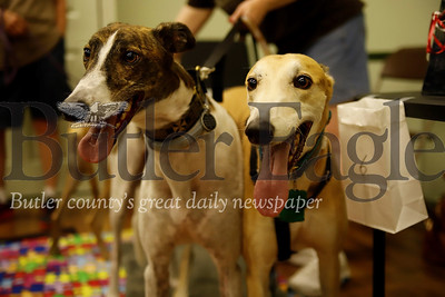 'Trevor' (left) and 'Teddy' stand ready for pets at Saturday's Paws for Health fundraiser. Seb Foltz/Butler Eagle