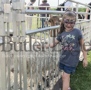 Photo by Michele JurystaMilania, 6, of Butler, pets a goat Saturday during Adams Township Community Day.