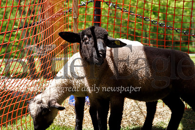 Baby sheep at Small Farm Animals Day at Harmonist Barn. Seb Folt/Butler Eagle