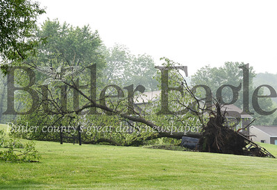 Harold Aughton/Butler Eagle: Several large trees were uprooted along 3rd avenue in Evans City, Tuesday evening.