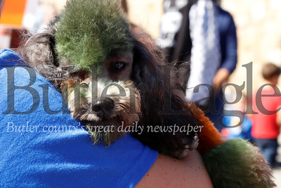 'Stanley B' rests up on owner Amy Jackson's shoulder after a busy day at Applefest. Seb Foltz/Butler Eagle