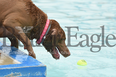 An eager dog inches forward to try and reach a tennis ball without falling in at Cranberry Township Community Waterpark Saturday. Seb Foltz/Butler Eagle