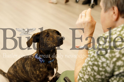 Graham the Newhaven Court at Clearview assisted living center community dog sits for a treat. Seb Foltz/ Butler Eagle
