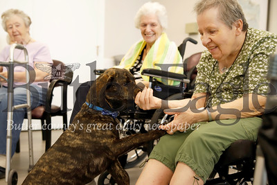 Graham the Newhaven Court at Clearview assisted living center community dog eats a treat out of Katherine Scherder's hand after shaking hands. Seb Foltz/ Butler Eagle