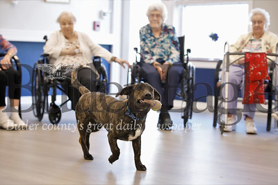 Newhaven Court at Clearview assisted living center community dog Graham visits with seniors during a morning exercise clase at the facility. Graham is a Butler Humane Society dog who was adopted by the community and lives at the complex fulltime. Seb Foltz/Butler Eagle