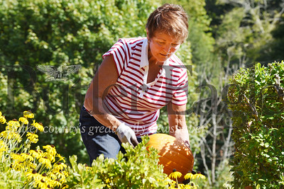 Harold Aughton/Butler Eagle: Ann Marron looks for the perfect place to place a pumpkin Wed. afternoon outside the Allegheny Grille in Foxburg.