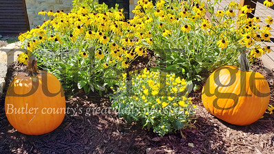 Harold Aughton/Butler Eagle: Ann Marron prepared her mulch bed Wed. Sept. 25 for the fall season outside the Allegheny Grille in Foxburg.