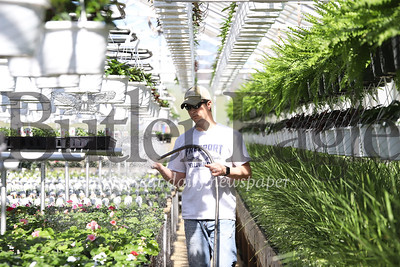 Greg Schnur,  of Schnur's Greenhouse in Butler waters some Flowers Thursday. With area churches closed through easter week, the greenhouse has had a number of canceled flower orders in what would otherwise be a busy spring season.  04/02/20. Seb Foltz/Butler Eagle