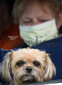 Harold Aughton/Butler Eagle: Janet Darling of Boyers brought her 8-year-old Shitzu-Yorkie mix, Sissy, with her to the Butler Fair Grounds Tuesday, April 28, 2020.