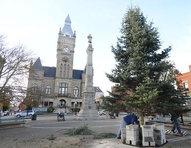 29148 Christmas trees in Diamond Park