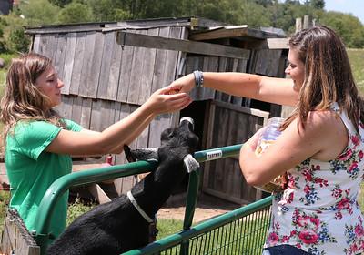 Kendyl Steighner and her mom Jayme Steighner feed Kendyl's goats Saturday at their home outside of Saxonburg.  Seb Foltz/Butler Eagle 08/08/20