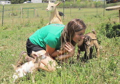 Butler County 4-H member Kendyl Steighner, 16, of Saxonburg plays with some of her youngest goats Saturday at her family's home. Steigner will be a junior this year at Knoch High School. While missing the opportunity to compete in the Butler County Farm Show, Steighner said it hasn't effected her ability to find home for her baby goats. Seb Foltz/Butler Eagle