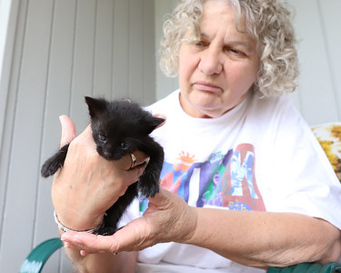Alice Stewart and one of her four kittens. Her husband Jim found the kittens. Seb Foltz/Butler Eagle