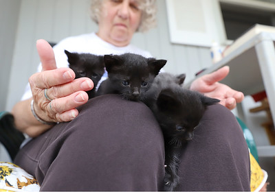 Alice Stewart and the four kittens her husband Jim found. Seb Foltz/Butler Eagle