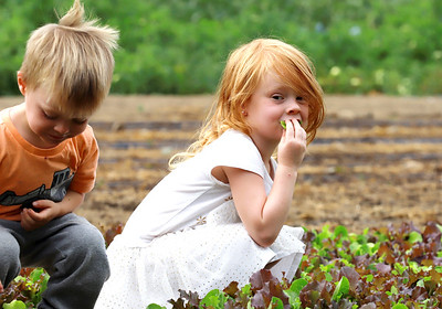 Althea Kellog, 5, tests the lettuce crop with her brother Declan, 3, on the family farm in Slippery Rock Monday. Seb Foltz/Butler Eagle