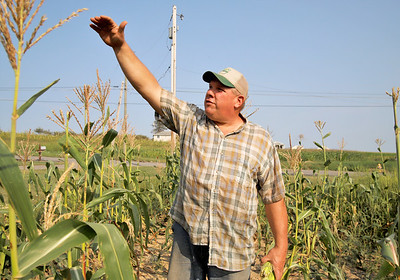 Ken Metrick of Harvest View Farm shows how tall his drought-impacted corn should be at this time of year. Metrick said the drought has increased deer problems and stunted growth of some of his crops Seb Foltz/Butler Eagle 08/26/20