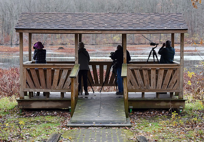 While migratory birds are making their way to warmer weather, bird watchers are flocking to Lake Arthur to observe. Harold Aughton/Butler Eagle