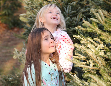 """Adalena Portman, 5, and her sister Adrianna, 6, ask Christmas trees at Dambaugh's Pine Hill Farms if they want to come home with them Thursday. Four or five trees """"said"""" no before the found a tree that said """"agreed"""" to be theirs. Seb Foltz/Butler Eagle 12/11/20"""